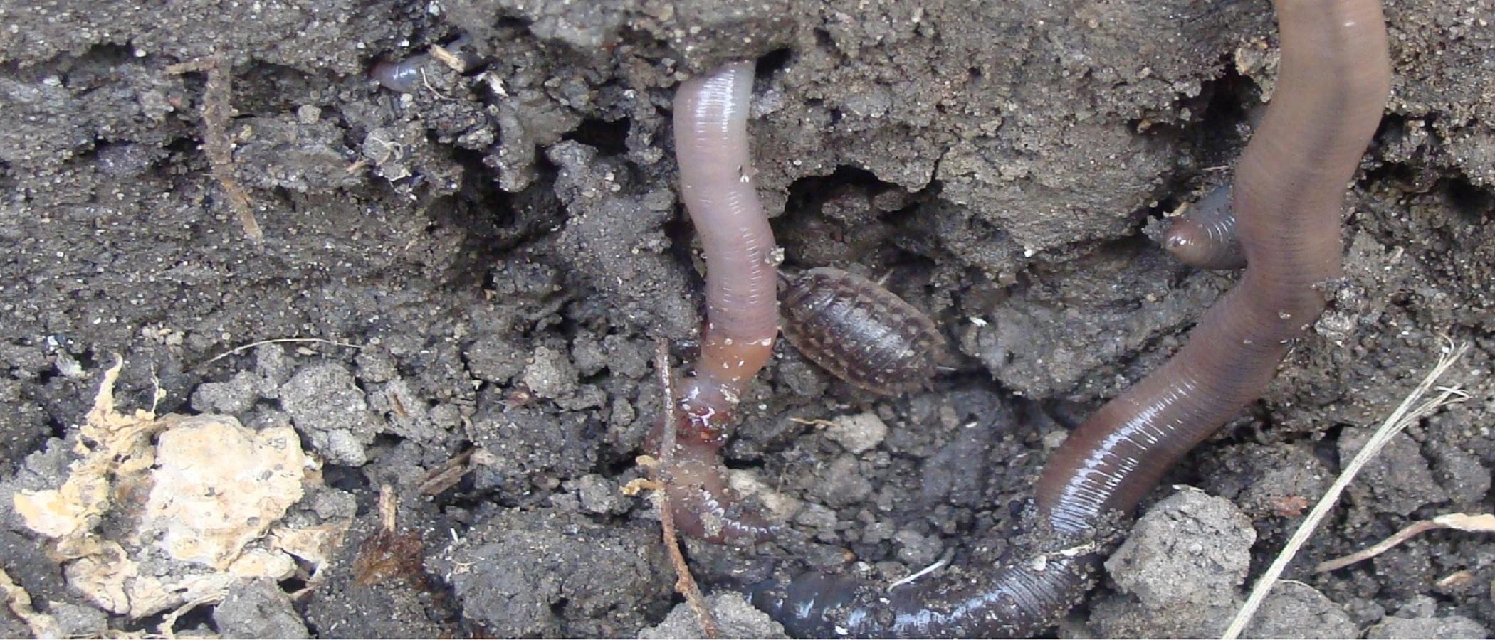 homepage slide 5 21 bij 9 regenworm